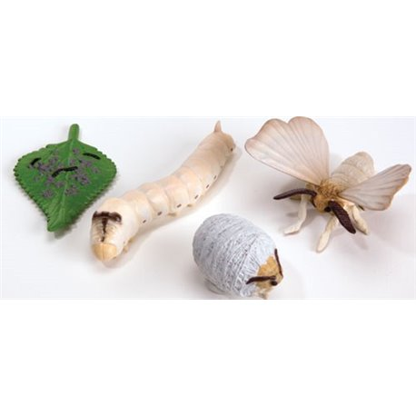 Models of the life cycle of a Silkworm