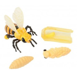 Models of the life cycle of a Honey Bee