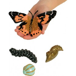 Models of the life cycle of a Butterfly