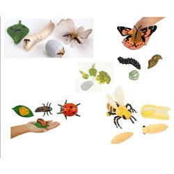 set of 5 Insect lifecycles